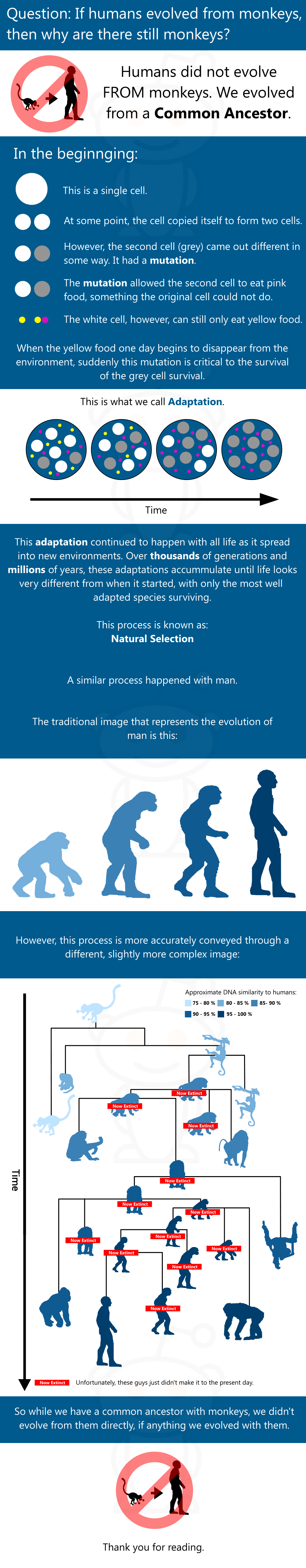 Evolution Explained