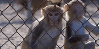 Pros and Cons of Animal Testing On Cosmetics