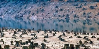 6 Staggering Effects of Overpopulation