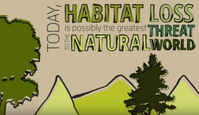 6-solutions-to-habitat-destruction