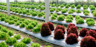 5 Benefits of Drip Irrigation
