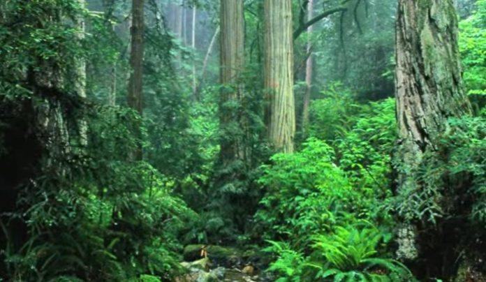 5 Deforestation Statistics